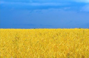 Flag_ukr